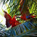 PHILEAS FROG VOYAGES Agence de Voyages Paris 17 Costa Rica 1