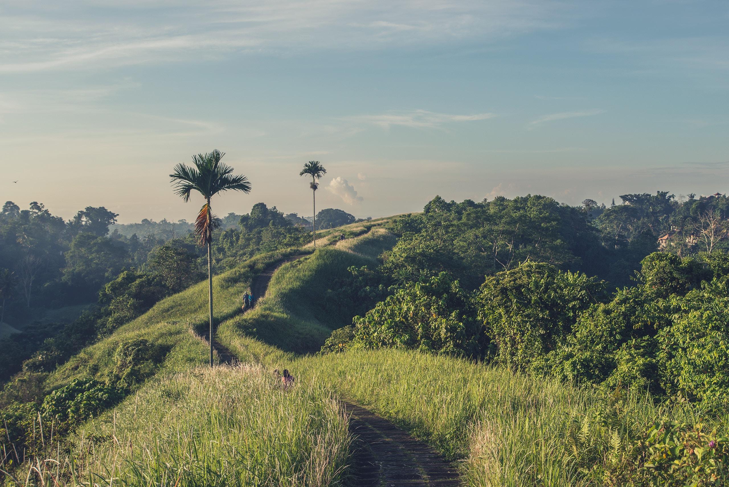 Indonésie : Joyaux de Yogyakarta, douceurs balinaises et le pays Toraja
