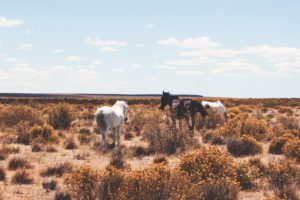 chevaux-argentine-agence de voyages phileas frog paris 17