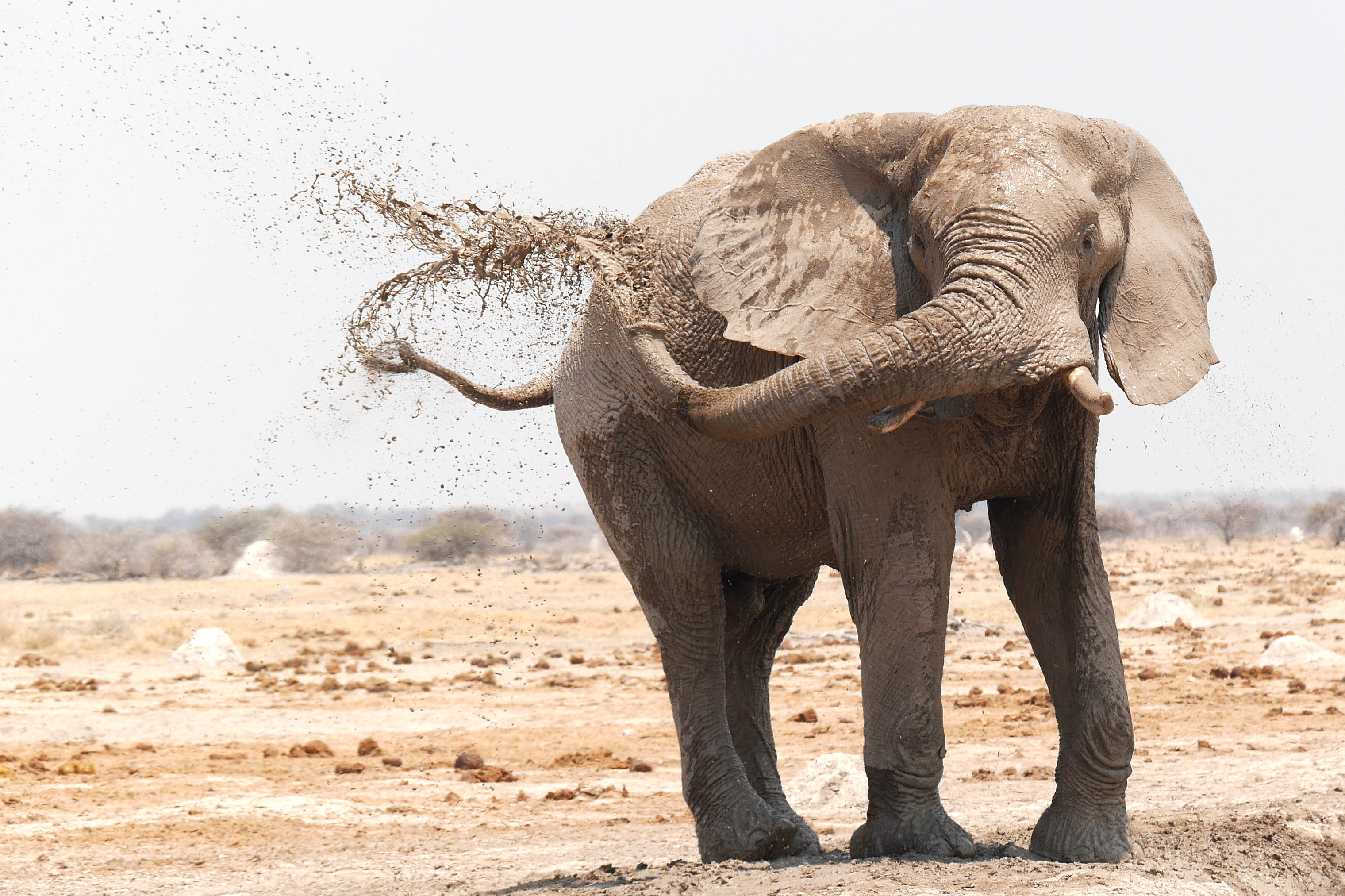 Les beautés du Botswana