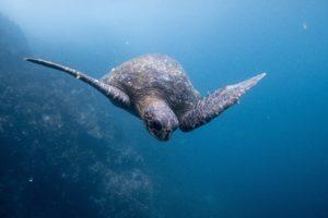tortue equateur agence de voyages phileas frog paris 17