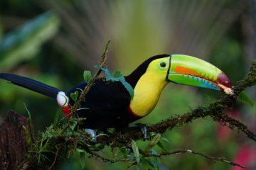toucan-costa rica agence de voyages phileas frog paris 17
