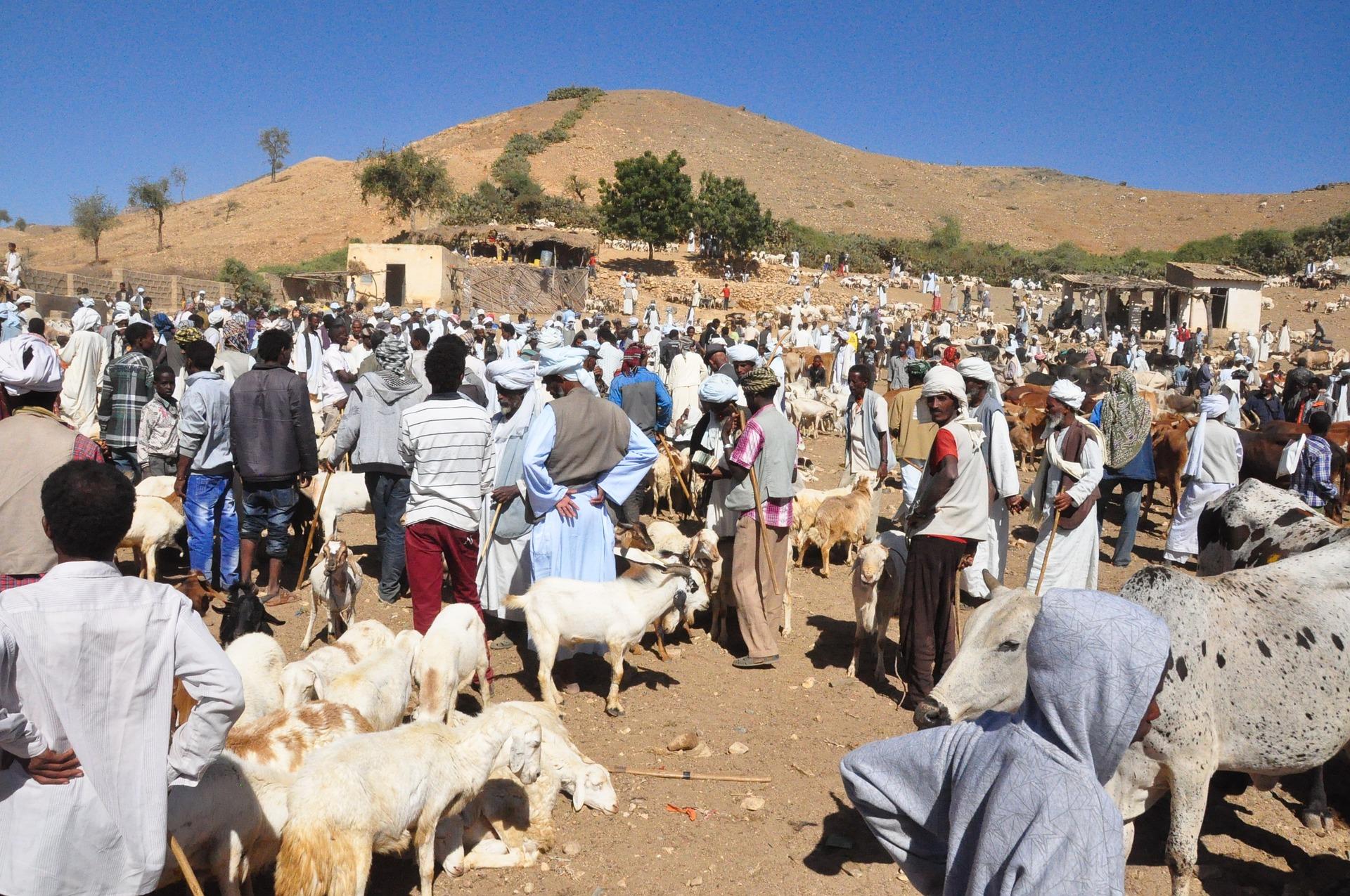 Érythrée : perle cachée de la Corne de l'Afrique