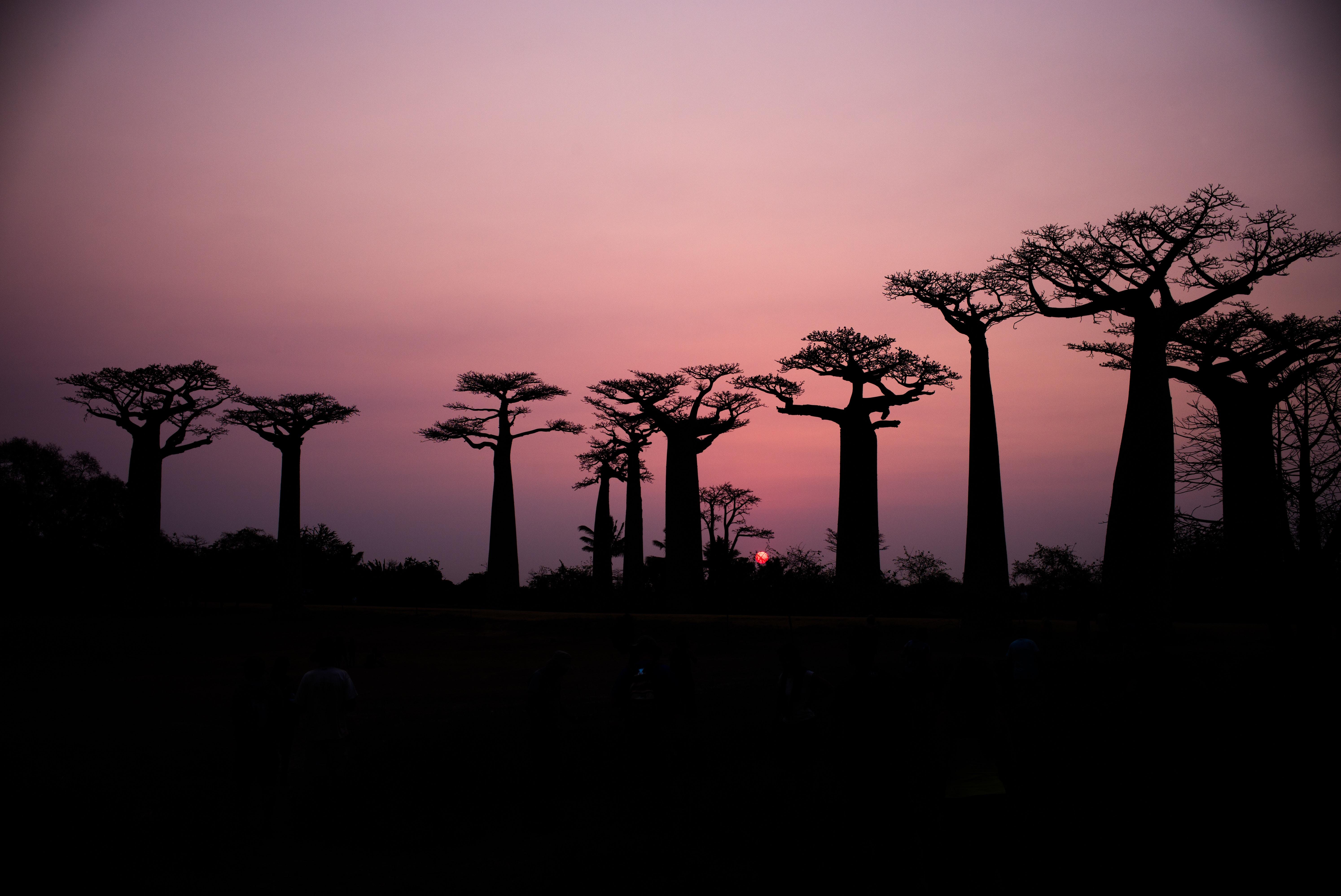 Madagascar :  la fôret de corail