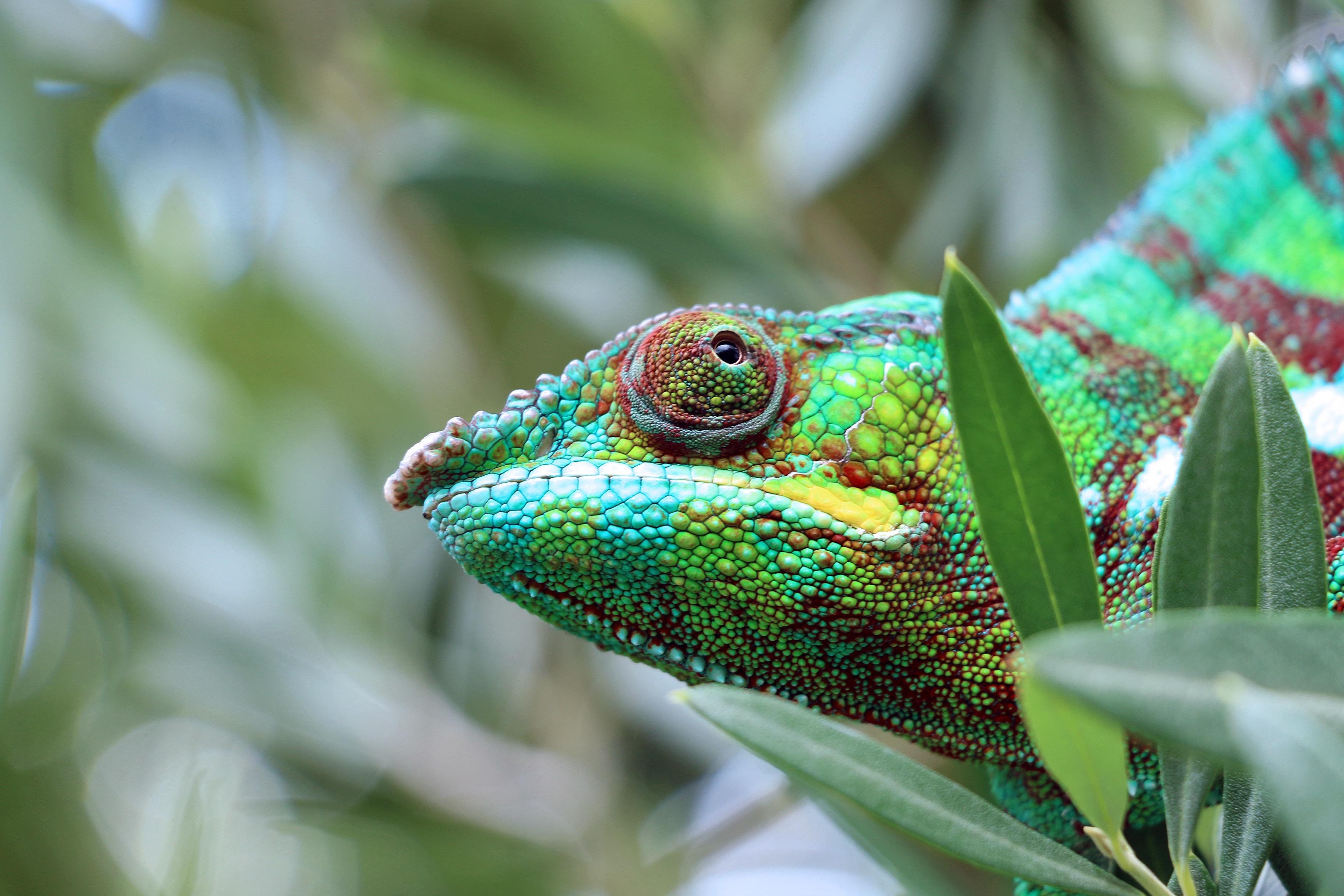 Madagascar :  l'est tropical et Sainte Marie