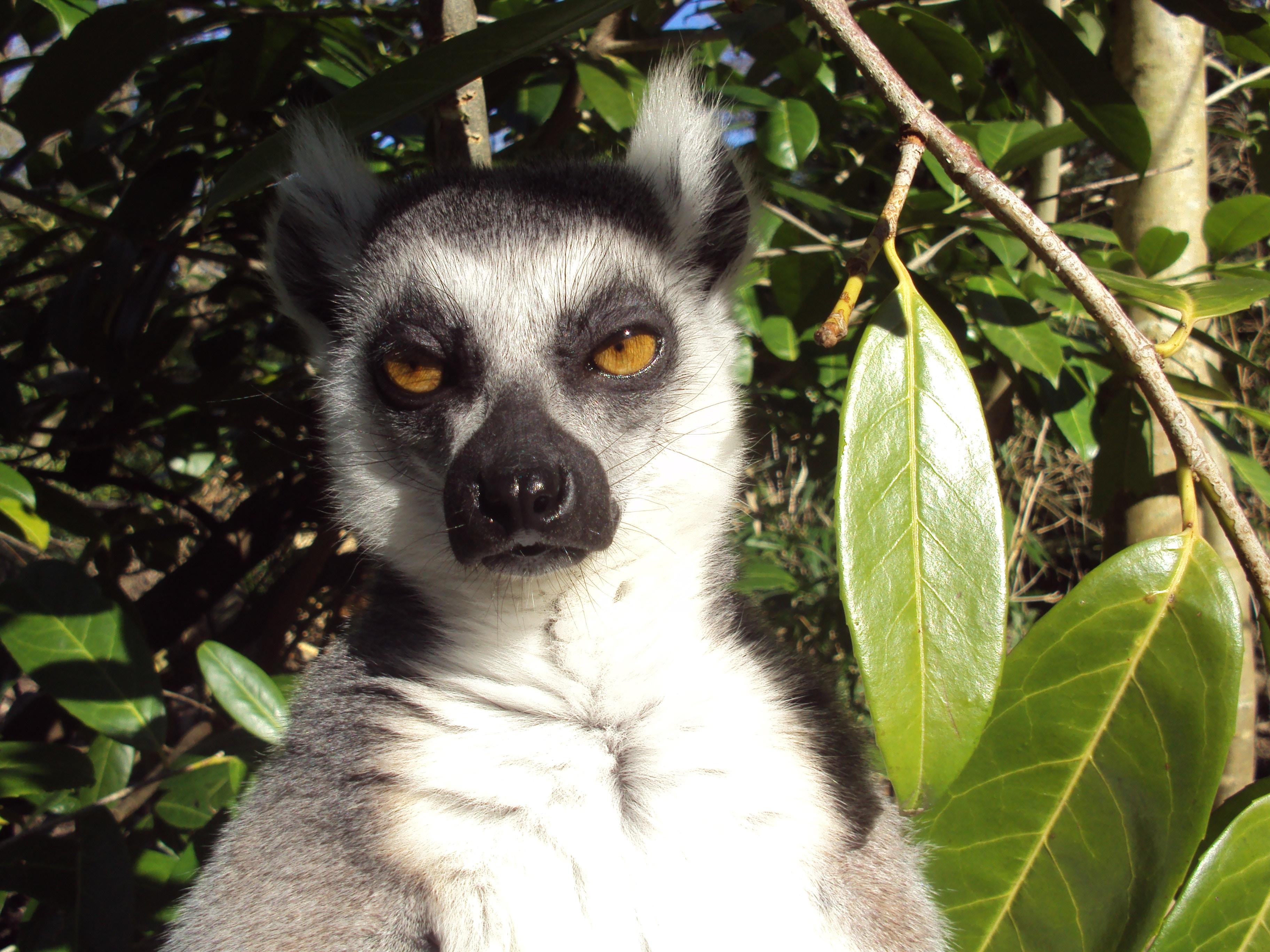 Circuit Sud + Est de Madagascar