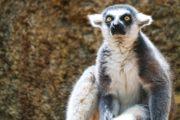 madagascar lemurien agence de voyages phileas frog paris 17.