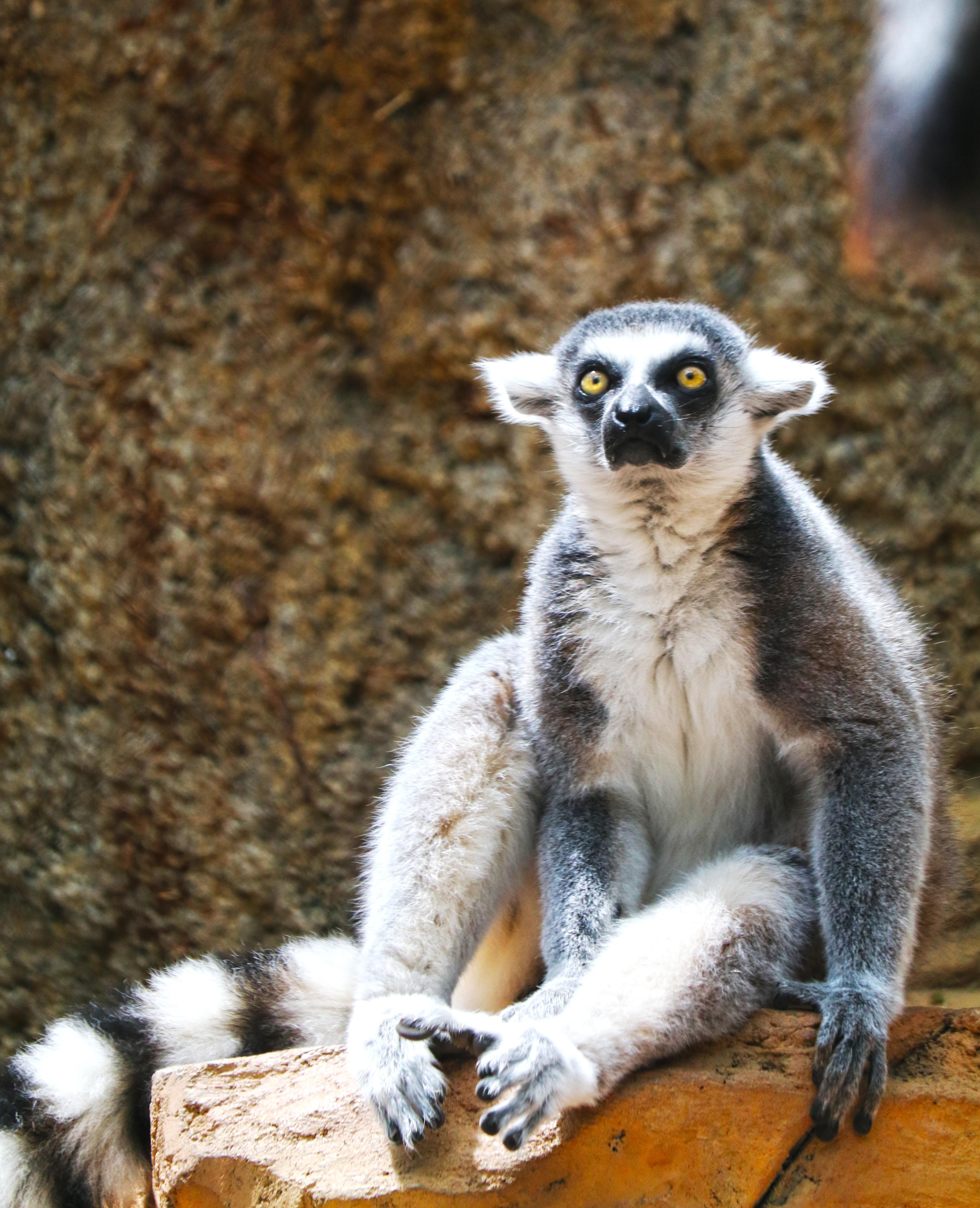 Madagascar : escapade sur la piste des lémuriens