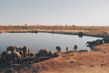 zimbabwe elephants agence de voyages phileas frog paris 17