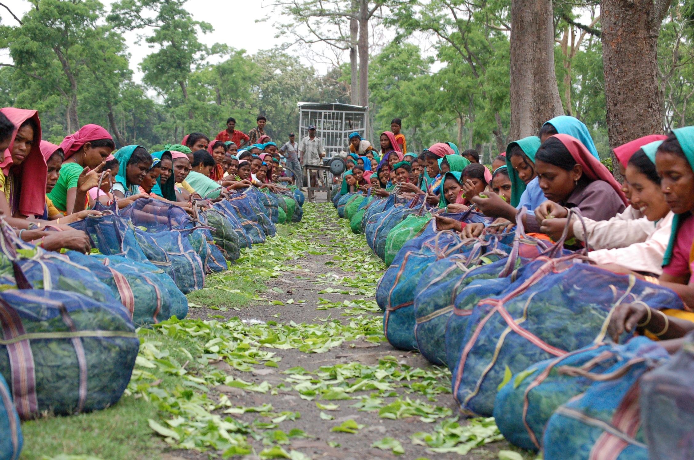 Inde : Festivals Assam / Arunachal Pradesh / Meghalaya / Nagaland