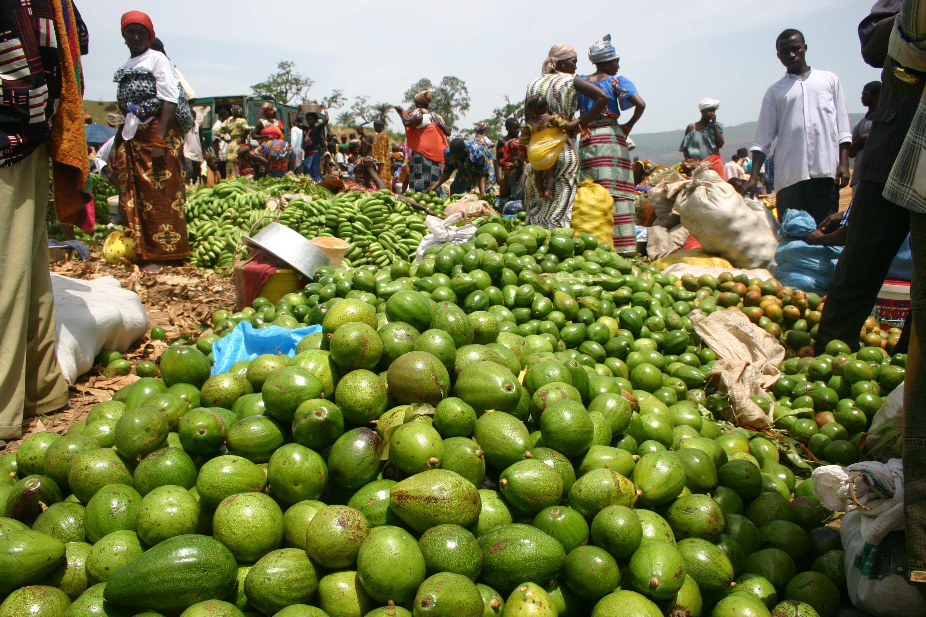 Guinée : Monts et Merveilles