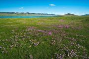 fleurs 2 mongolie agence de voyages phileas frog paris 17