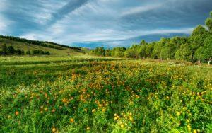 fleurs mongolie agence de voyages phileas frog paris 17