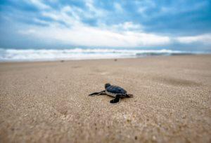 turtle-agence phileas voyage