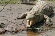 crocodile-ethiopia- ethiopie agence de voyage phileas frog paris 17